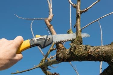 tree pruning Edinburgh