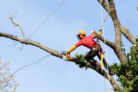 tree surgeon Edinburgh example